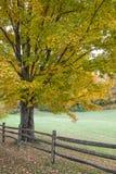 Autumn Oak träd och staket royaltyfri bild