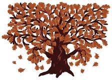 Autumn Oak Tree Stock Photo