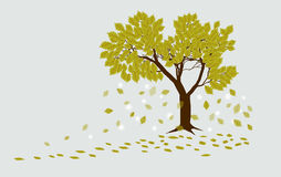 Autumn oak tree with falling leaves. On a light gray background Royalty Free Stock Photo