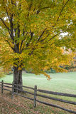 Autumn Oak tree and Fence Royalty Free Stock Image
