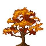Autumn oak tree. Illustration of autumn oak tree isolated on a white background royalty free illustration
