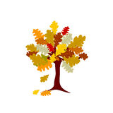 Autumn oak tree illustration on white background Royalty Free Stock Photo
