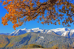 Autumn oak tree with mount Timpangos. Stock Photo