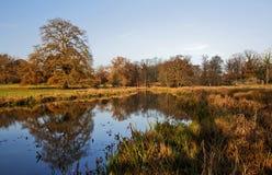 Autumn Oak Tree reflektierte sich im Fluss Avon Lizenzfreie Stockfotos