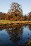 Autumn Oak Tree reflektierte sich im Fluss Avon Stockfotos