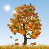 Autumn oak vector background Stock Photos