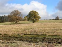Autumn oaks Stock Photography