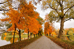 Autumn October colorful park. Foliage trees alley Royalty Free Stock Images
