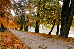 Autumn October colorful park. Foliage trees alley Stock Photo