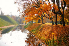Autumn October colorful park. Foliage trees alley Stock Images
