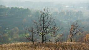 Autumn October Deciduous Forest in the Hills. Panoramic landscape. Ukraine. Europe stock photos