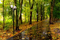 Autumn October landscape. Yellow autumn trees and fallen autumn leaves on the wet footpath in park alley after rain. Autumn October landscape. Yellow autumn stock photography