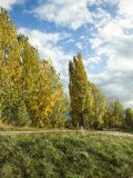 Autumn October landscape. Yellow and red leaves against the background of a cloudy sky. Autumn October landscape. Yellow trees and cloudy sky. Sunny weather royalty free stock image