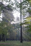 Autumn. October. Sunny morning in the pine forest. Fog and rays of light royalty free stock image