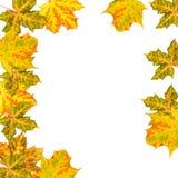 autumn odizolowane liście obraz royalty free