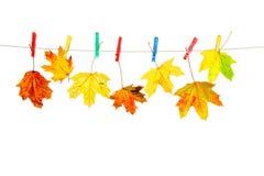 autumn odizolowane liście Zdjęcia Royalty Free