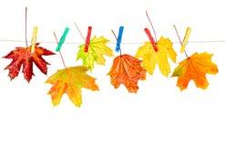 autumn odizolowane liście Zdjęcie Stock