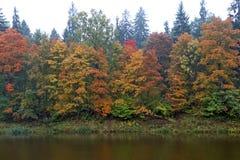 Ogre river in city of Ogre, Latvija. Autumn Ogre river in city of Ogre, Latvija Royalty Free Stock Images