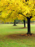 Autumn In Ohio. Sharon Woods Metro Park Royalty Free Stock Photography