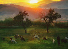 Autumn oil paint with man and goats Stock Images