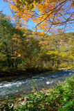 Autumn of Oirase Gorge in Aomori Pref. Stock Image