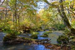 Autumn of Oirase Gorge in Aomori Pref. Royalty Free Stock Image