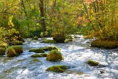 Autumn of Oirase Gorge in Aomori Pref. Royalty Free Stock Photography