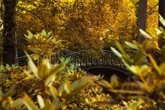 Autumn - Old  hiden bridge in autumnpark Stock Photography