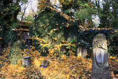 Autumn from the old Prague Cemetery Royalty Free Stock Image