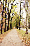 Autumn in the old town district. Autumn, yellow leaves on the trees are falling, in an old area of the city - construction of 1950-1960 years, the atmosphere of Royalty Free Stock Photography