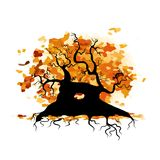Autumn old tree with roots for your design Stock Photos