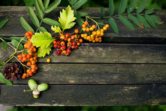 Autumn old wooden background Stock Image