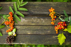 Autumn old wooden background with natural elements Stock Images