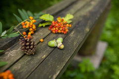 Autumn old wooden background with natural elements, selective focus. Autumn old wooden background with natural elements: cones,rowanberry, red berries and leaves Royalty Free Stock Photography