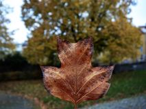 Autumn one leaf royalty free stock photo