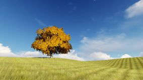 Autumn one tree on the field falling leaves. Autumn one tree on the field yellow falling leaves stock video footage