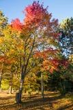 Autumn in Ontario Stock Image