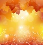 Autumn orange background with maple leaves Stock Photos
