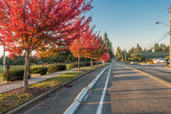 Autumn Orange In Des Moines. A row of trees explodes in rich orange colors. Shot taken in Des Moines, Washington Royalty Free Stock Photos