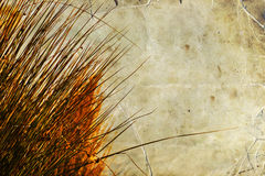 Autumn orange grass, bright yellow sun light Royalty Free Stock Photo