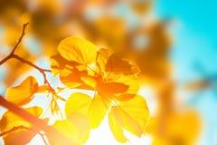 Autumn Orange Leaves royaltyfria foton