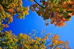 Autumn Orange Leaves Imagens de Stock