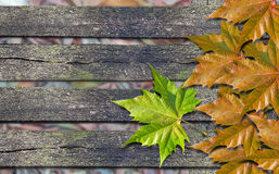 Autumn orange leaves and green leaf over wooden bench with copy Royalty Free Stock Photo