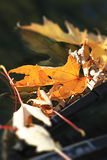 Autumn orange leaves macro focus on windscreen on wipers. Leaves royalty free stock photos