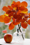 Autumn Orange Leaves And Red apple Stock Images