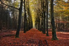 Autumn Orange Leaves Trees Trail Royalty Free Stock Images