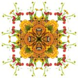 Autumn orange mandala. Autumn floral mandala with different flowers and pumpkin Royalty Free Stock Photo