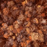 Autumn orange shaded trees forest