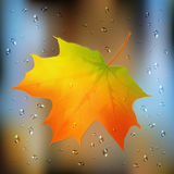 Autumn orange vector leaf on wet glass Stock Photo