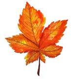 Autumn orange watercolor chestnut leaf stock illustration